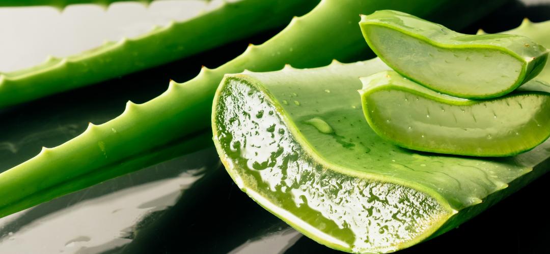 Le cosmétique à tout faire: le gel d'Aloe Vera